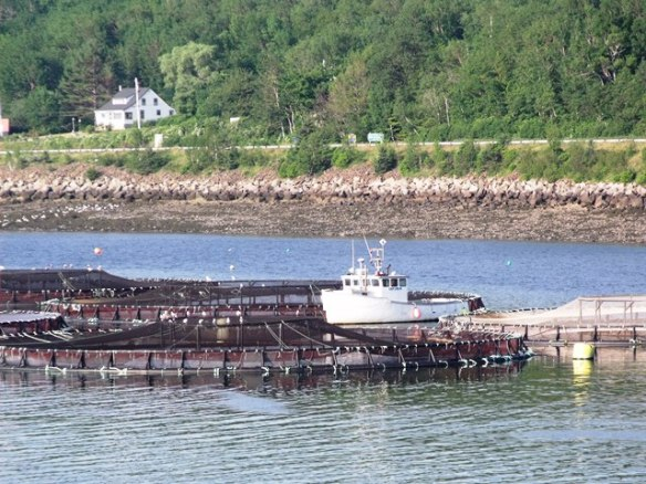 digbyboat