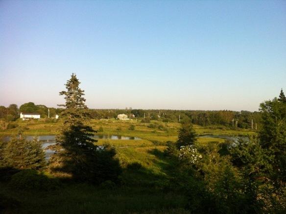 meadowevening